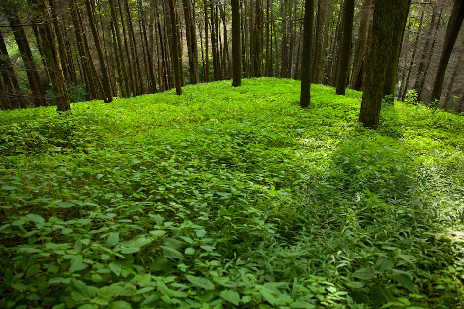 Joyce Kilmer Forest 2